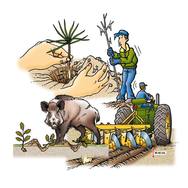 Ilustraciones para manual de reforestación
